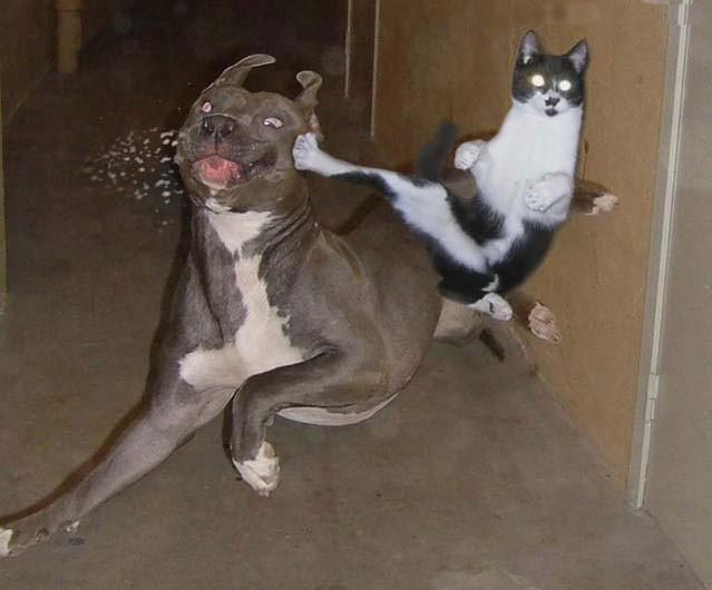 Animal Matrix