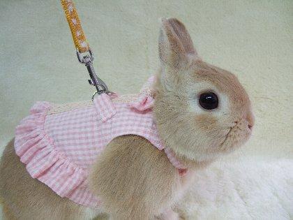 Conejo con vestido